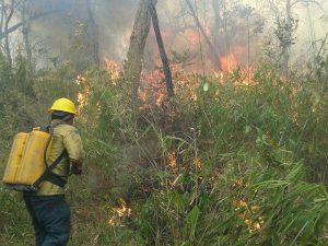 Los Guardianes de la Selva en la actividad de extinción de incendios en la TI Araribóia (Foto: Colección CTI).