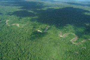 Imagem de sobrevoo realizado em 2012 na região da proposta de Reserva Indígena Yavarí-Tapiche (Foto: Hilton Nascimento/Acervo CTI).
