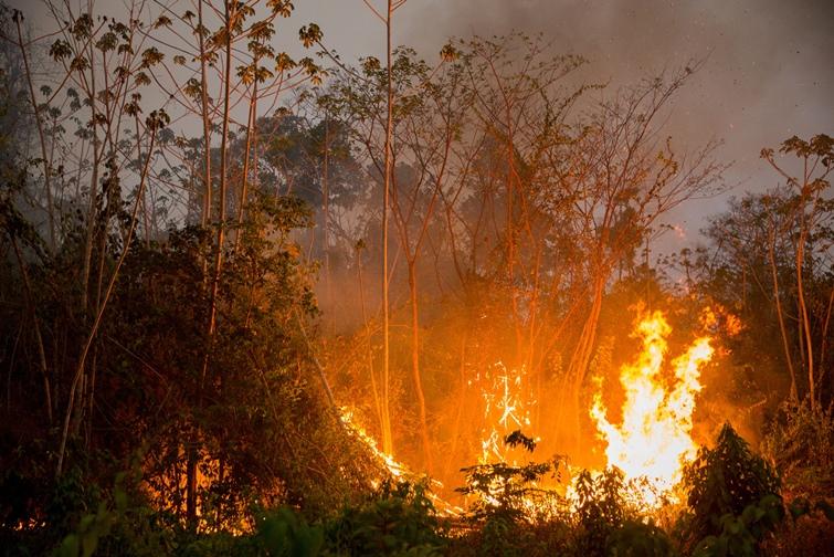 Floresta queimando na TI Araribóia onde o fogo afetou 54,4% da área total (Foto: Marizilda Cruppe / Greenpeace)